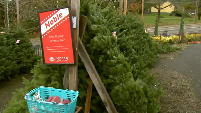 National Christmas Tree shortage could affect Texoma