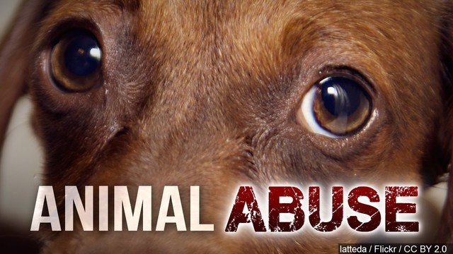 Several animals seized from Elmira home