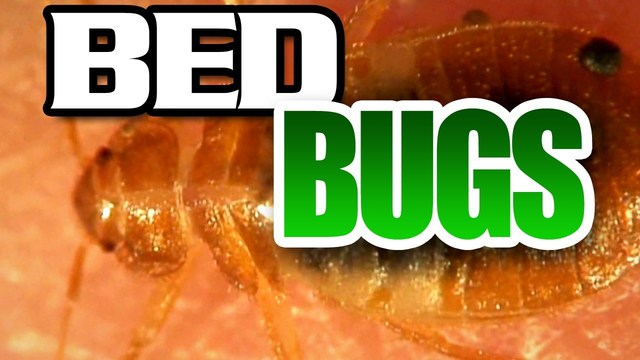 Bed bugs found in one room at the Corning Center