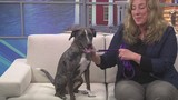 Pet of the Week 5/13/19: Shenzi