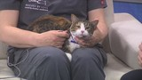 Pet of the Week 5/20/19: Giselle